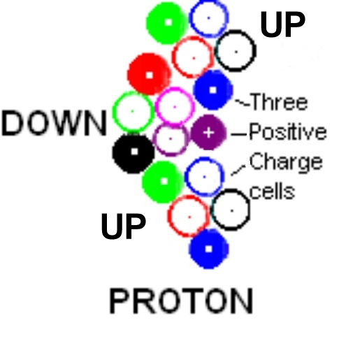 space cells of proton